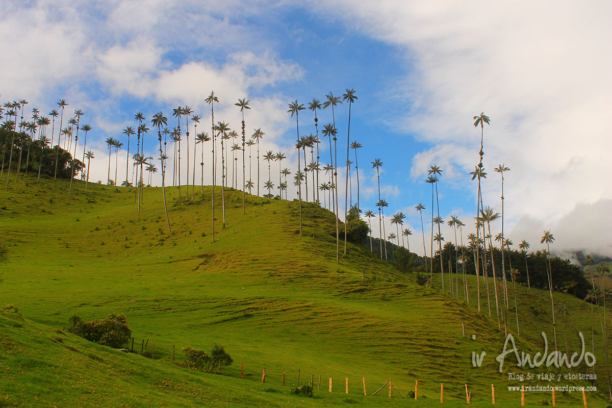salento-colombia-cocora-7
